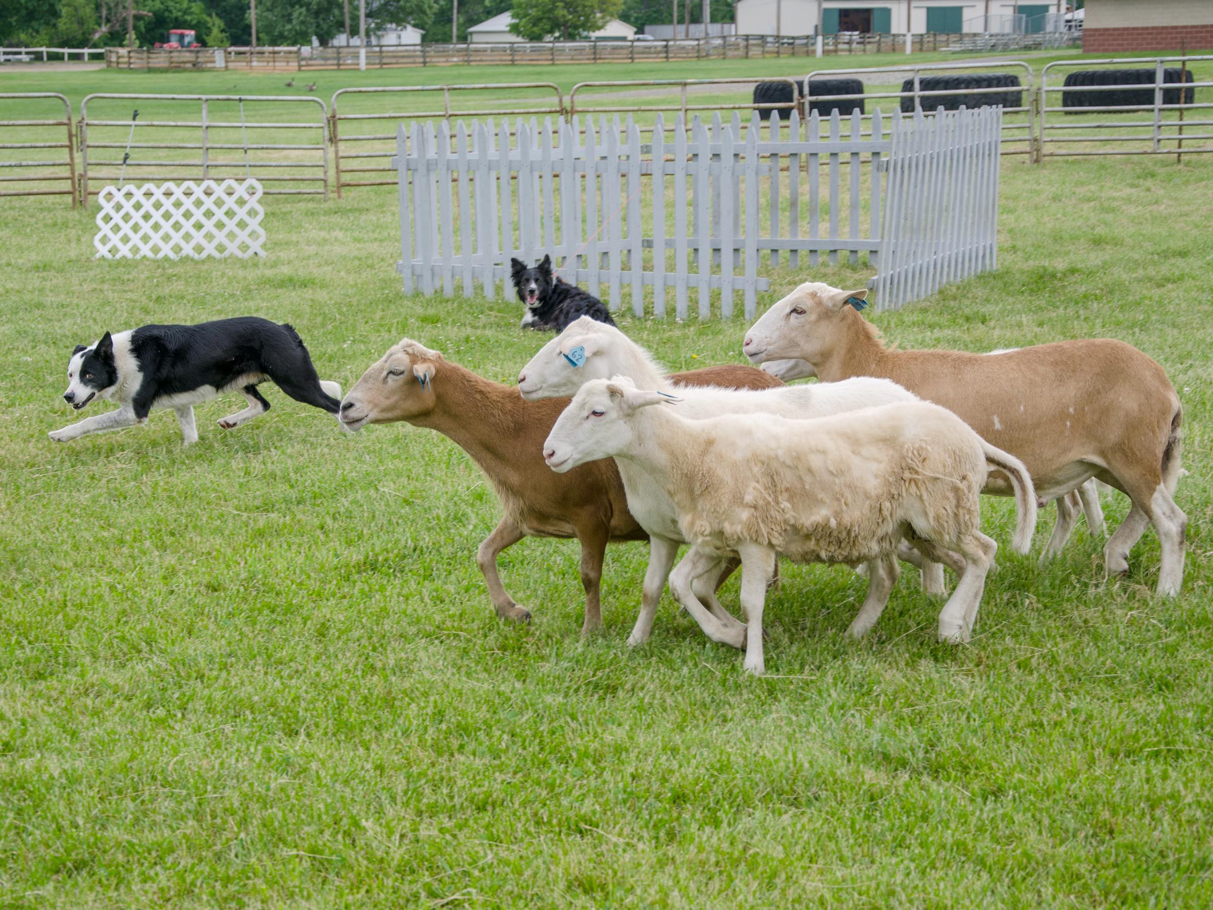 Sheep and Fiber Festival